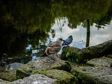 Two Birds Perching On Rock Near Lake