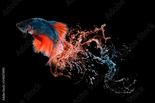 Photo Beautiful colorsHalfmoon Betta capture the moving moment on the water spreadin