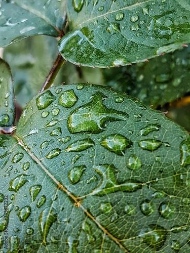 Fotografia Full Frame Shot Of Wet Leaf