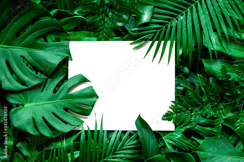Papier Peint - tropical green leaves and palms  background with white paper card note, nature flat lay concept