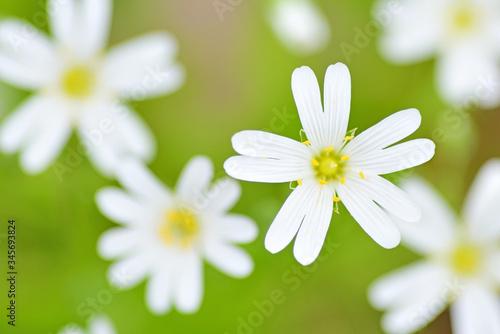 Fototapeta Spring field flowers. obraz