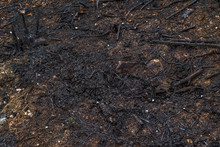 Fire In The Forest. Burned The...