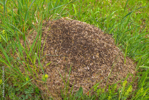 a large anthill in a field among green grass Canvas Print