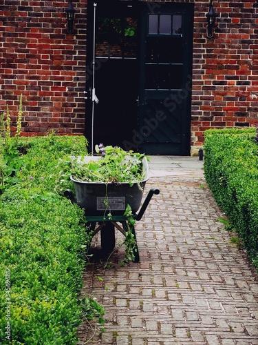 Plants In Wheel Barrow On Footpath At Back Yard Fototapete