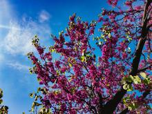 Pink-purple Flowers On The Bra...