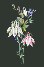 Summer Bouquet With Columbine Flowers. Watercolor Illustration.