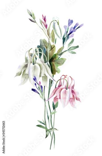 Fototapeta Summer Bouquet with Columbine Flowers. Watercolor Illustration.
