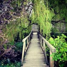Wooden Footbridge By Trees In ...