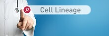 Cell Lineage. Doctor In Smock ...
