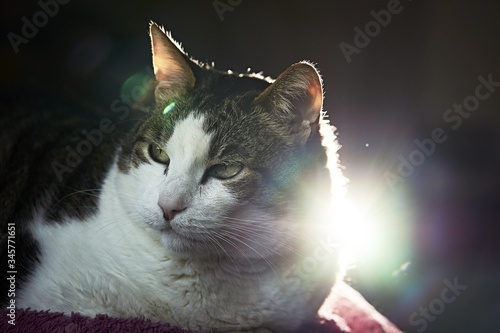 Selective focus shot of a fluffy cat with green eyes and a dark background