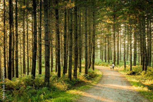 Rear View Of Woman With Son Walking On Road Amidst Trees In Forest Fototapet