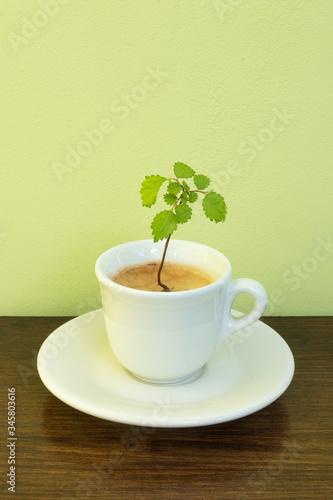 Fotografie, Obraz Coffee is life