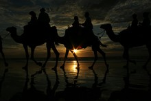 Silhouette People On Camels At Sea Shore During Sunset