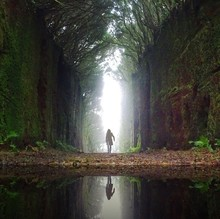 Woman With Reflection Walking On Pathway Along Trees