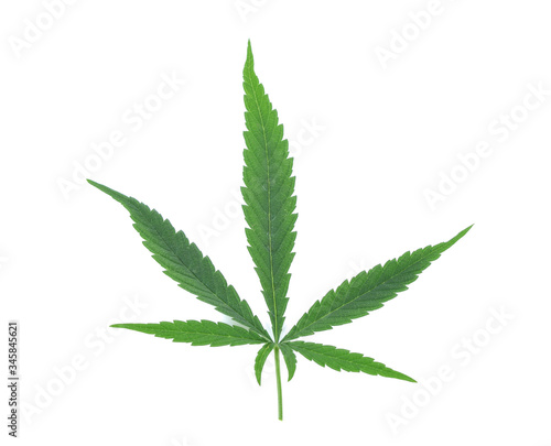 Fresh Medical marijuana isolated on white background Canvas Print