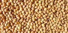 Green Lentils Pattern. Natural Organic Lentils For Healthy. Texture Of Lentil