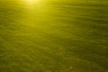 Green Grass Close-up In Sunset...