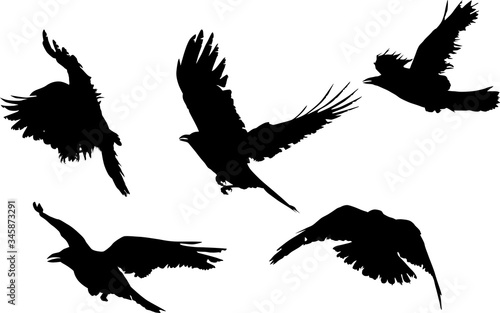 group of five black crow silhouettes isolated on white Canvas Print
