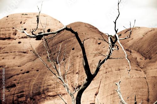 Canvastavla View Of Desert Against Sky