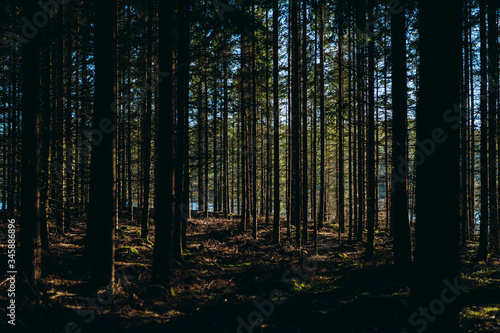 Trees in the forest - 345886896