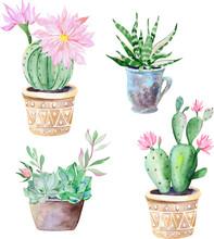 Watercolor Succulent Plants And Cactus In Pots