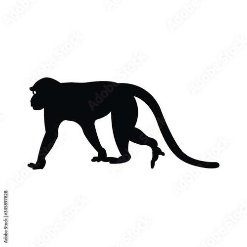 Photo Walking apes monkey with silhouette and line art, ape, chimpanzee,