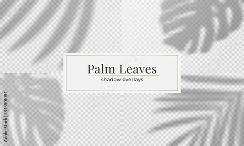 Obraz Vector set of palm leaves shadow overlay. Vector transparent shadow effect - fototapety do salonu