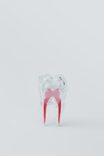 Artificial Plastic Tooth With Red Roots On Grey Background