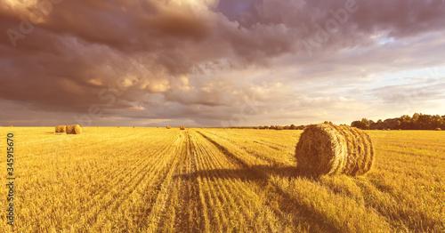Obraz na plátně Scene with haystacks on the field in autumn sunny day