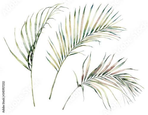 Obraz Watercolor tropical set with palm leaves. Hand painted exotic leaves and branches isolated on white background. Floral illustration for design, print, fabric or background. - fototapety do salonu