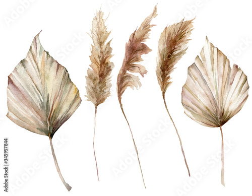 Photo Watercolor tropical set with dry palm leaves and pampas grass