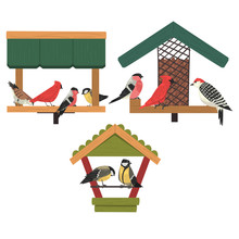 Winter Bird Feeder, Northern Birds Feeding By Seeds, Cute Red Cardinal, Chickadee, Woodpecker, Bullfinch Vector Illustration