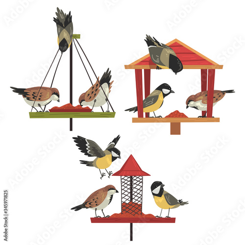 Obraz Winter Bird Feeder with Chickadees and Titmouses, Northern Birds Feeding by Seeds Vector Illustration - fototapety do salonu