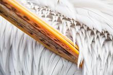 White Pelican Beak Among Its F...