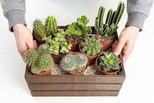 Man Holding A Decorative Wooden Box Full Of Cactus Pots