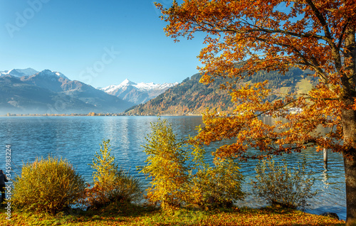 Wall mural - Awesome sunny landscape in the forest. Wonderful Autumn scenery. Picturesque view of nature. Amazing natural Background. Sun rays through colorful trees. Incredible view on alpine forest lakeside