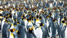 Pole Wildlife Area Group Of Pe...