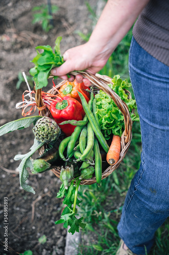 Detail of the basket with the vegetables harvested in the urban garden by an adu Tableau sur Toile