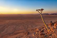 View Of A Quiver Tree (Aloe Di...