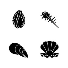 Different Sea Shells Black Gly...