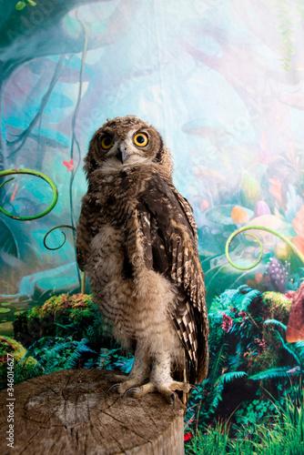 african owl Wallpaper Mural