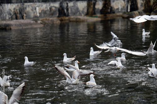 Photo Multiple seagulls flying around on top of a river located in Zürich, Switzerland
