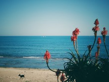 Scenic View Of The Sea With A Dog And Flowering Bushes On The Shore