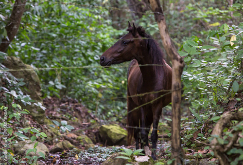 dramatic image of a horse in the countryside of the caribbean mountains of the dominican republic