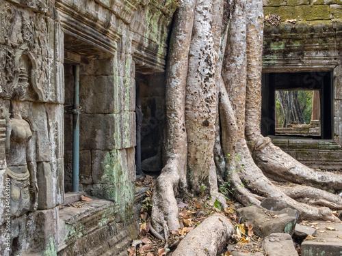 Spong trees invade the ancient walls of Ta Phrom Temple - Siem Reap, Cambodia Slika na platnu