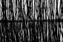 The Silhouette Of Green Reed S...