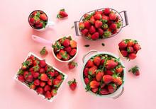 Ripe Strawberries Harvest. Man...