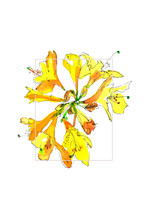 Digital Illustration Done From The Hand Drawn Sketch Of The Azalea Branch. Yellow And Orange Flowers, Green Leaves Drawn With Liners And Watercolors.