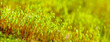 macro picture of beautiful moss spring background.