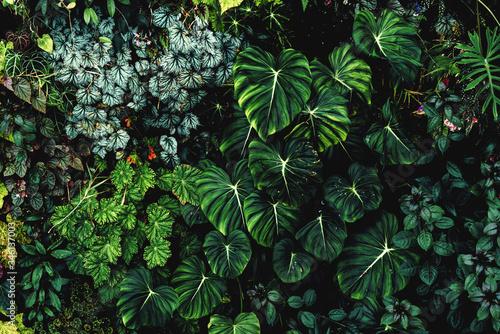 Cuadros en Lienzo Lush foliage background